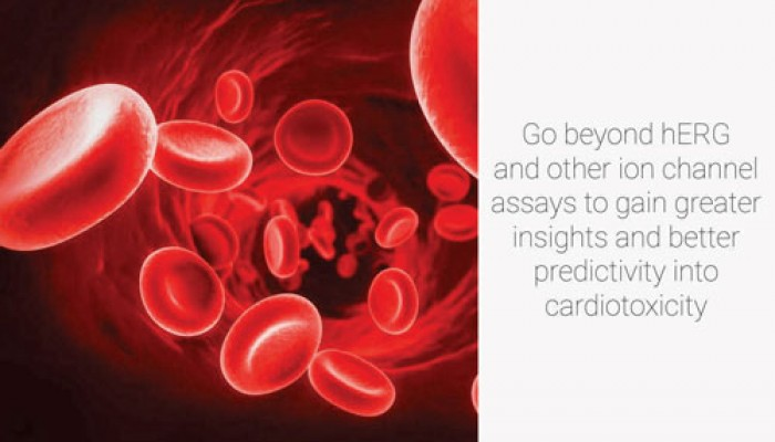 Go beyond hERG and other ion channel assays to gain greater insights and better predictivity into cardiotoxicity