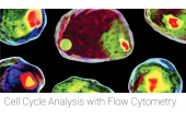 Cell Cycle Analysis with Flow Cytometry